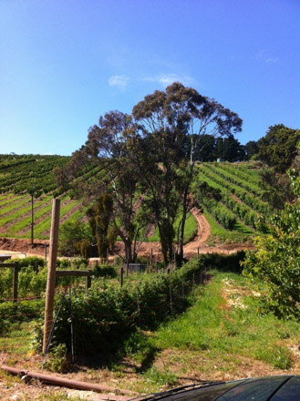 A photo of a bee hive location in the Adelaide Hills with vineyards in the distance